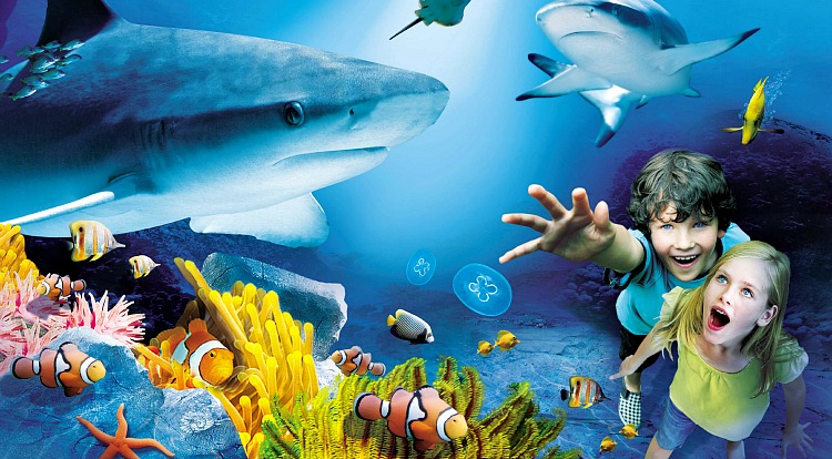 Attractions - Sealife Centre