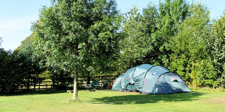Tent Pitch - Beeches Croft 3