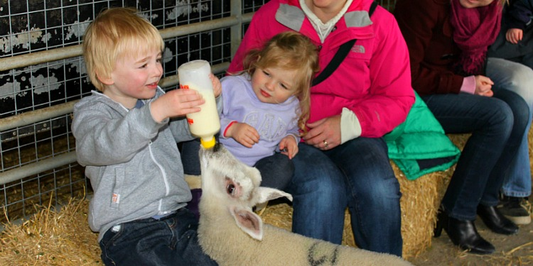 Playdale Farm Park - Feeding Lambs